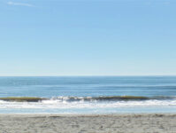 Shalimar 8C - Ocean Front