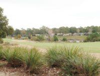 29 - 11.19 - Back Yard (3) - Ironwood 1313