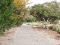 30 - 11.19 - Back Yard (4) - Ironwood 1313